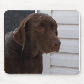 Labrador retriever del chocolate alfombrilla de raton