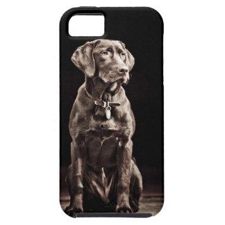 Labrador retriever del chocolate funda para iPhone 5 tough