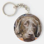 Labrador retriever del chocolate llaveros personalizados