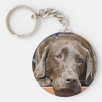 Labrador retriever del chocolate llavero redondo tipo pin