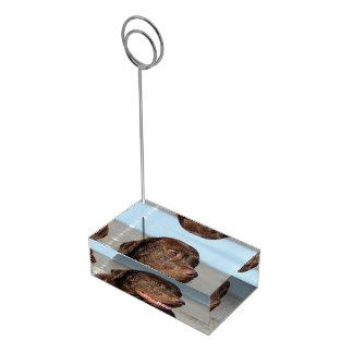 Labrador retriever del chocolate soportes para tarjetas de mesa