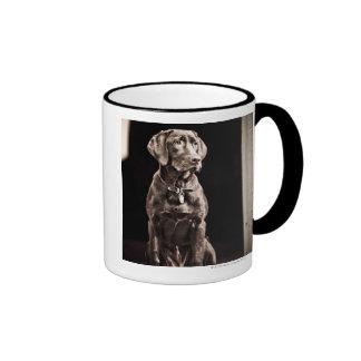 Labrador retriever del chocolate taza a dos colores