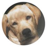 Labrador Retriever Dinner Plate