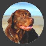 Labrador Retriever Dog Art - Bosco Classic Round Sticker