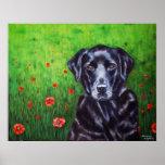 Labrador Retriever Dog Art - Poppy Poster