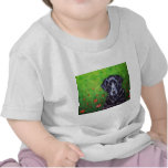 Labrador Retriever Dog Art - Poppy Shirt