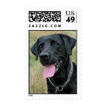 Labrador Retriever dog black postage stamp