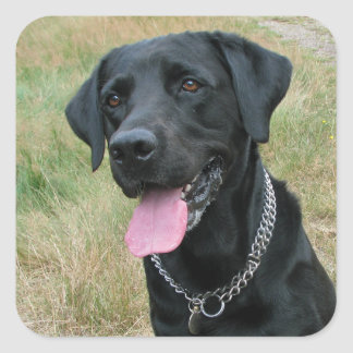 Labrador Retriever dog black stickers, gift idea Square Sticker