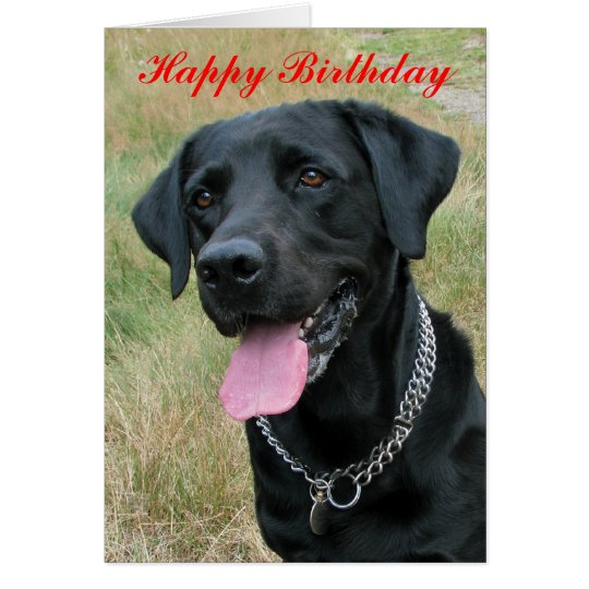 Labrador Retriever dog happy birthday card | Zazzle.com