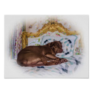 Labrador Retriever Dog, Sleeping Poster