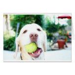 Labrador Retriever Dog Tennis Ball Greeting Cards