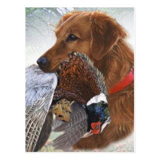 Labrador retriever el último perro de caza postal