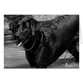 Labrador retriever en agua tarjeta de felicitación