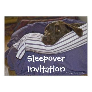 "Labrador retriever en cama invitación 5"" x 7"""