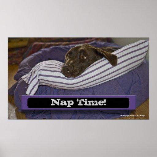 Labrador retriever en cama posters