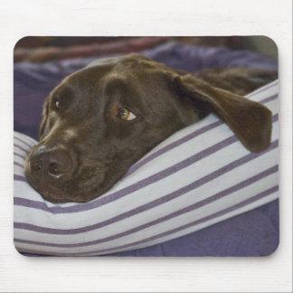 Labrador retriever en cama tapetes de ratón