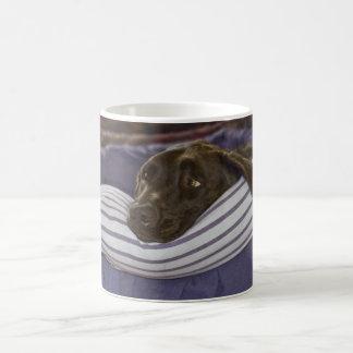 Labrador retriever en cama taza de café
