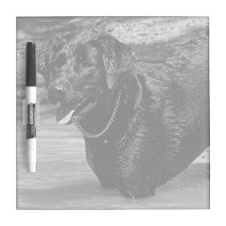 Labrador retriever en cuadrado del agua pizarras blancas de calidad