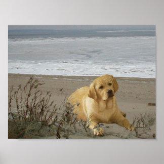 Labrador retriever en el poster de la playa