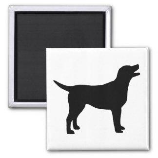 Labrador retriever (en negro) iman