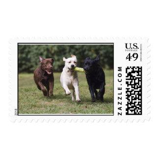 Labrador retriever estampilla