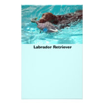 Labrador Retriever Flyer