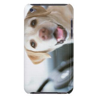 Labrador retriever Case-Mate iPod touch cobertura