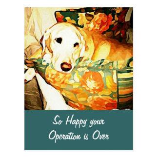 Labrador Retriever Get Well Postcard Postcard