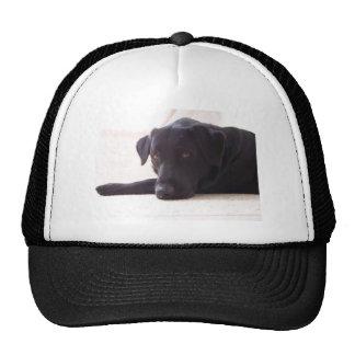 labrador retriever gorras