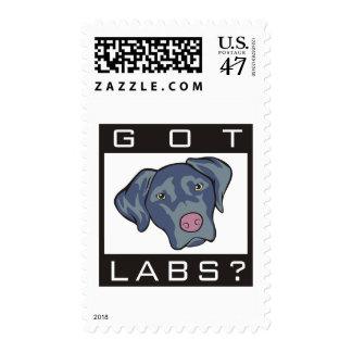 Labrador Retriever Got Labs? Postage Stamp