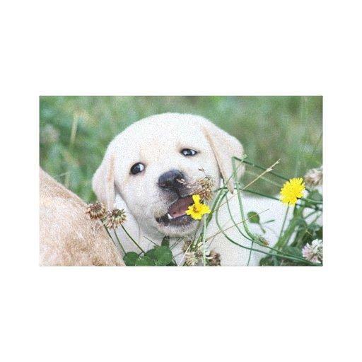 Labrador retriever impresion en lona