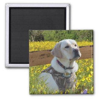 Labrador Retriever In The Field Magnet