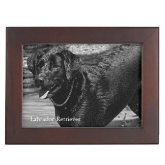 Labrador Retriever in Water Memory Box