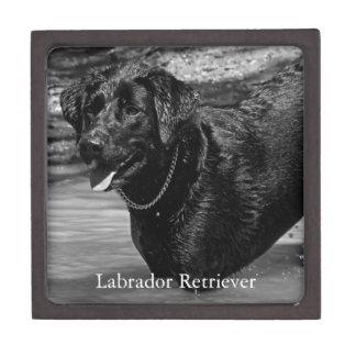 Labrador Retriever in Water Premium Keepsake Box