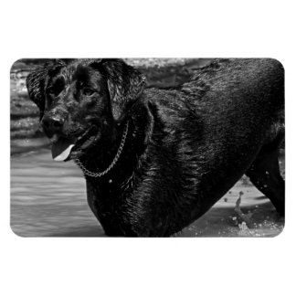 Labrador Retriever in Water Rectangular Photo Magnet