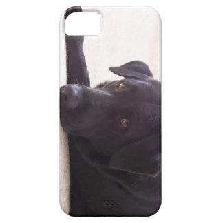 labrador retriever iPhone 5 funda