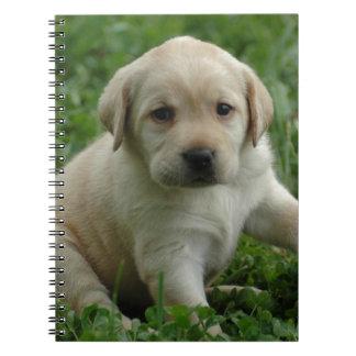 Labrador retriever libretas