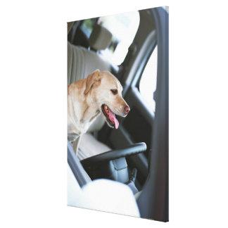 Labrador retriever impresión en lona