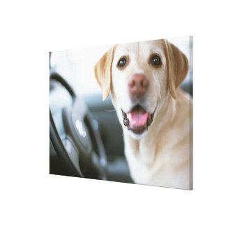 Labrador retriever impresiones de lienzo