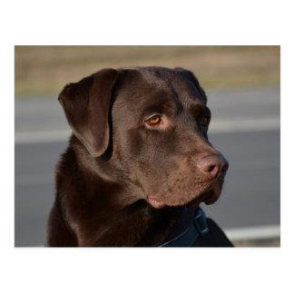 Labrador Retriever Lorenzo Tarjeta Postal