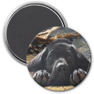 Labrador Retriever Magnet Beach