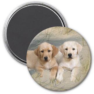 Labrador Retriever Magnet Pups On Beach