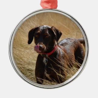 Labrador retriever marrón adorno redondo plateado