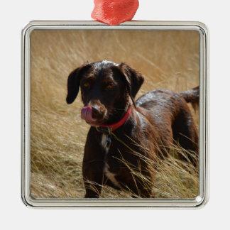 Labrador retriever marrón adorno cuadrado plateado