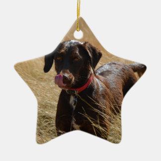 Labrador retriever marrón adorno de cerámica en forma de estrella
