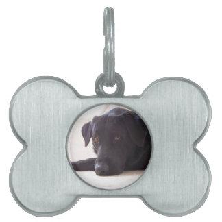labrador retriever placas de mascota