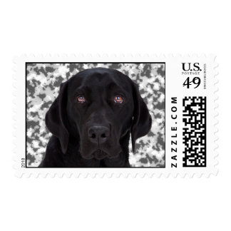 Labrador retriever negro estampillas