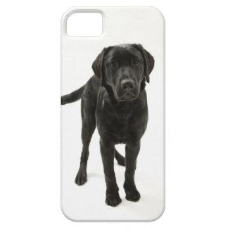 Labrador retriever negro iPhone 5 cárcasas