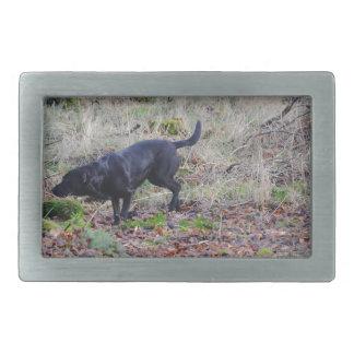 Labrador retriever negro hebilla de cinturon rectangular