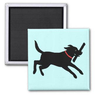 Labrador retriever (negro) imanes